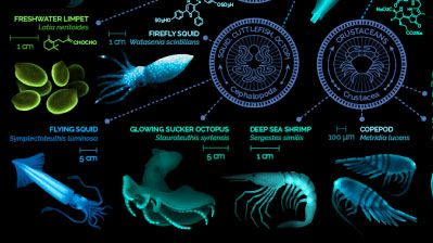 Your Guide to Glowing Organisms