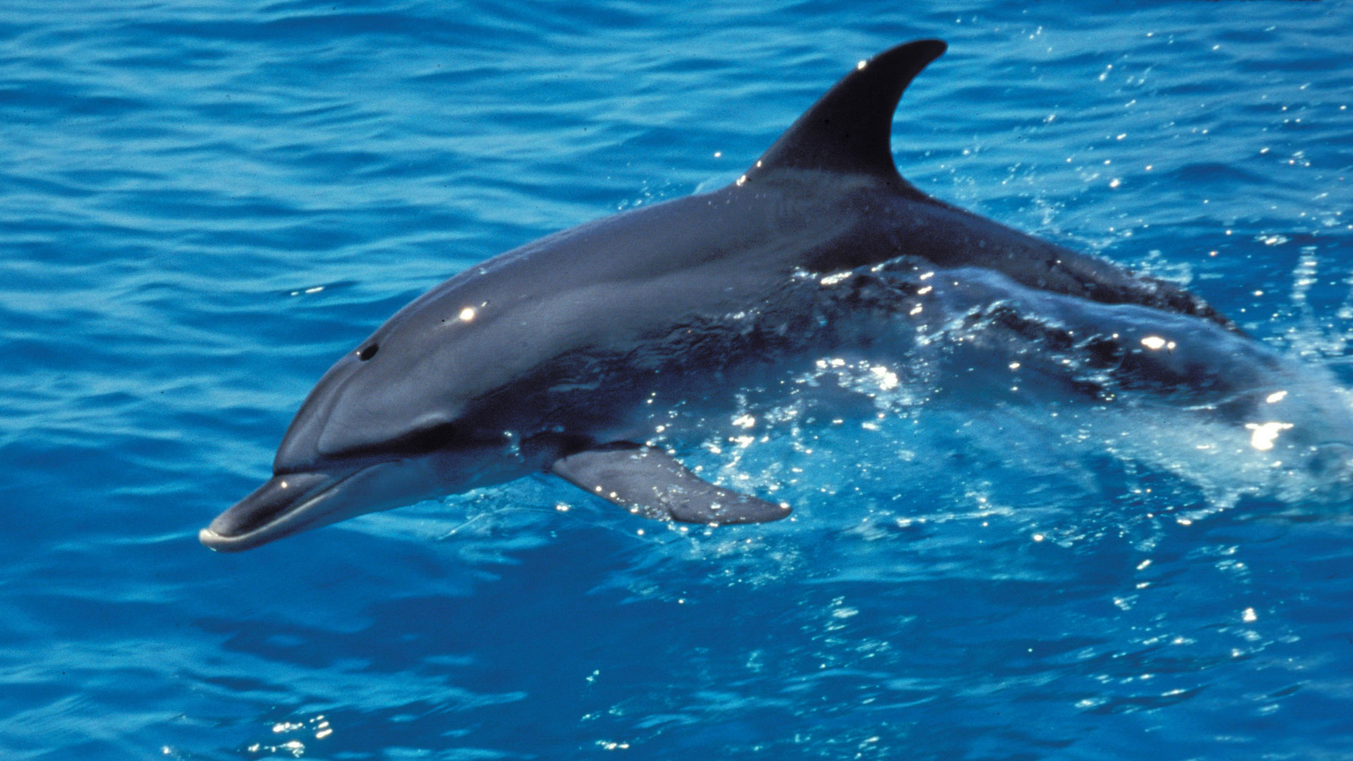 The Dolphin Defender About Nature Pbs