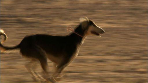 Dogs That Changed the World: The Rise of the Dog -- Speedy Saluki
