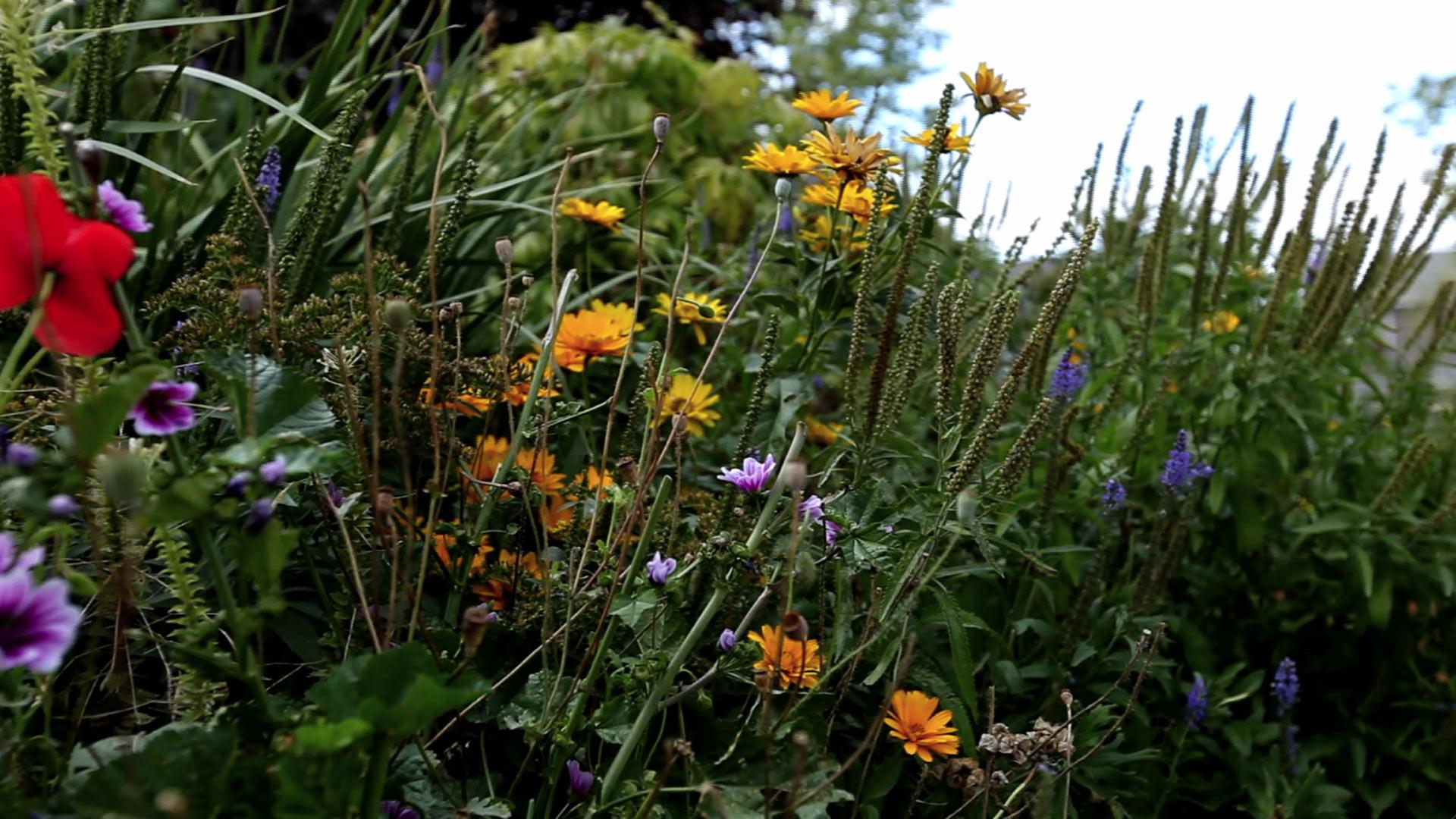 plants talk nature pbs plant jc cahill mezzanine think
