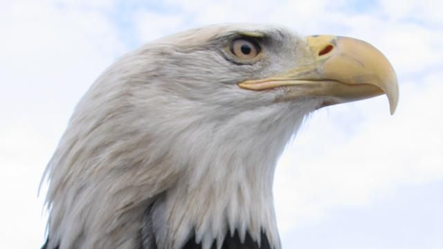 9285d11ee6c American Eagle | Full Episode | Nature | PBS