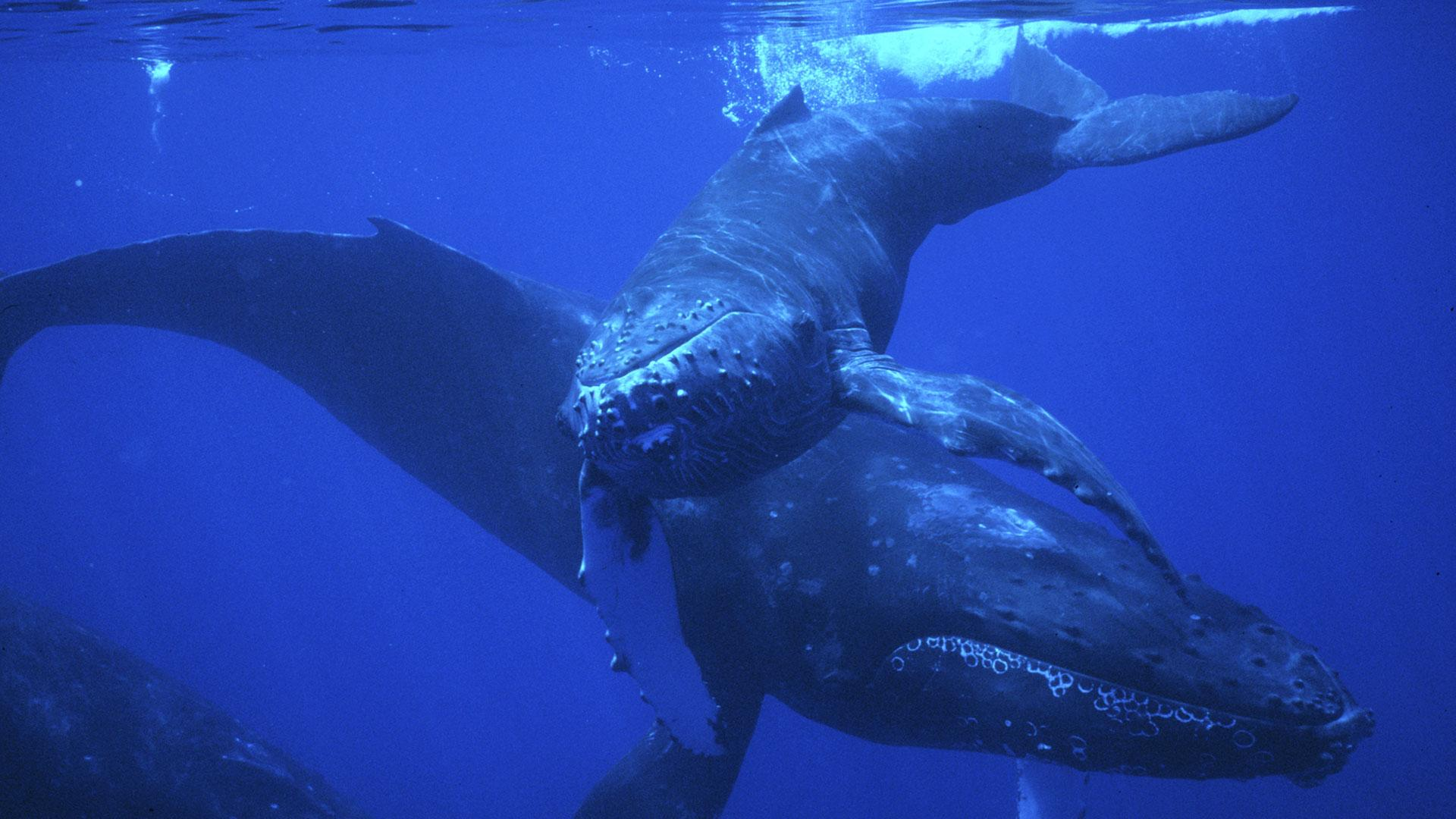 fellowship of the whales full episode nature pbs
