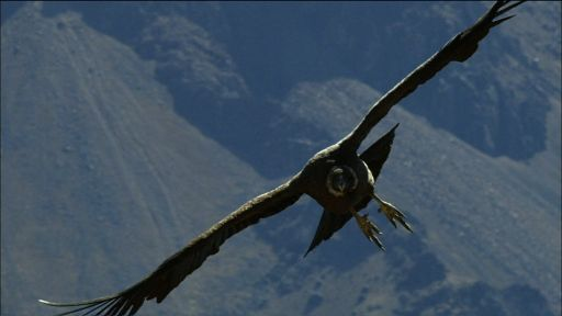 Condor Flight School