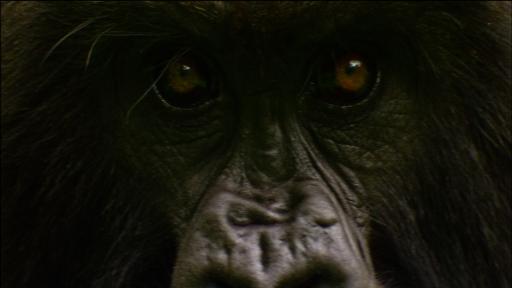 Gorilla Love Games