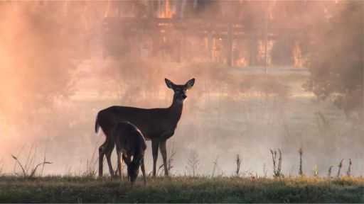 The Private Life of Deer -- Making The Private Life of Deer