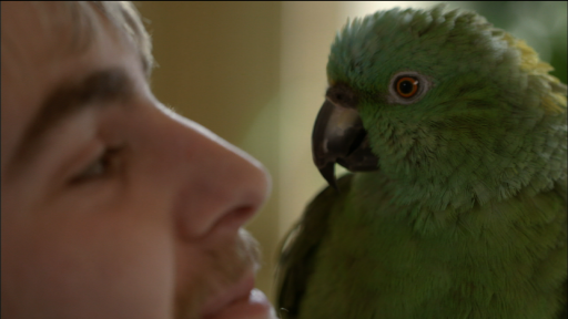 Clip |   Meet Basil, the Yellow-Naped Amazon