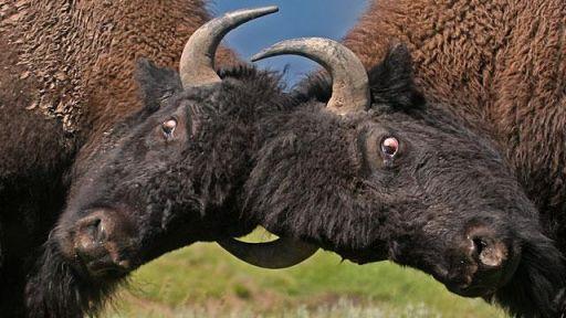 Episode 1 | Hunters & Herds