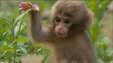 how to get a pet monkey in canada