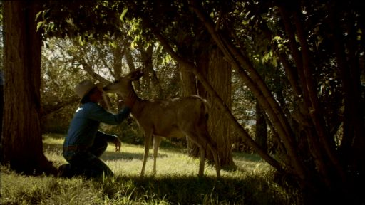 Touching the Wild -- Mule Deer Family Rituals