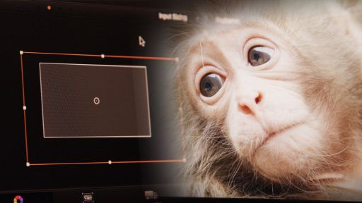 Snow Monkeys -- Behind-The-Scenes of Snow Monkeys, Part 2: Post-Production