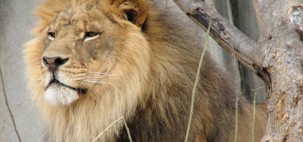 big cats nature pbs