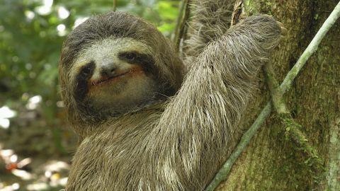 Animal-Misfits-Sloth