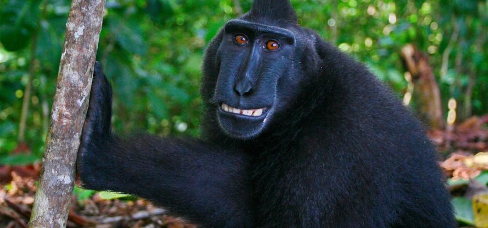 Monkeys | Nature | PBS