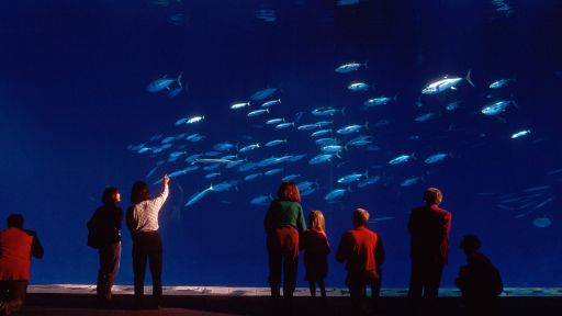 Oceans in Glass: Behind the Scenes of the Monterey Bay -...