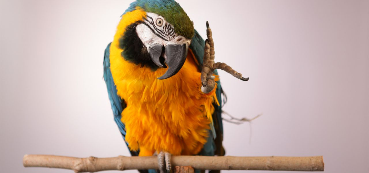 Parrot Videos For Cats
