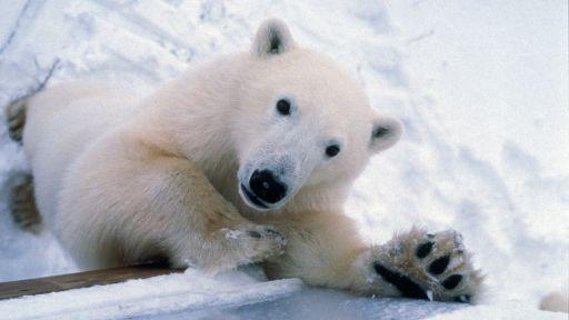 Episode 3 | Arctic Wanderers