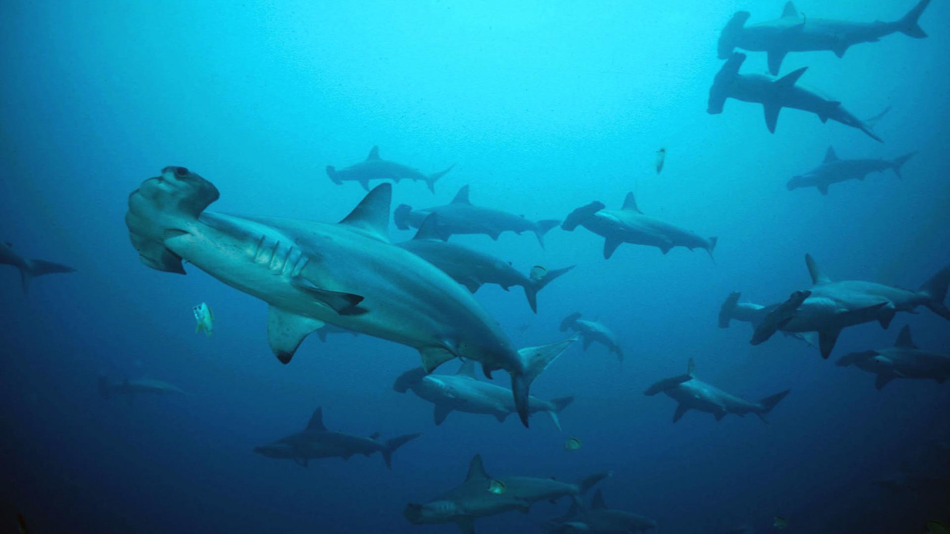 SharkMountain-Main