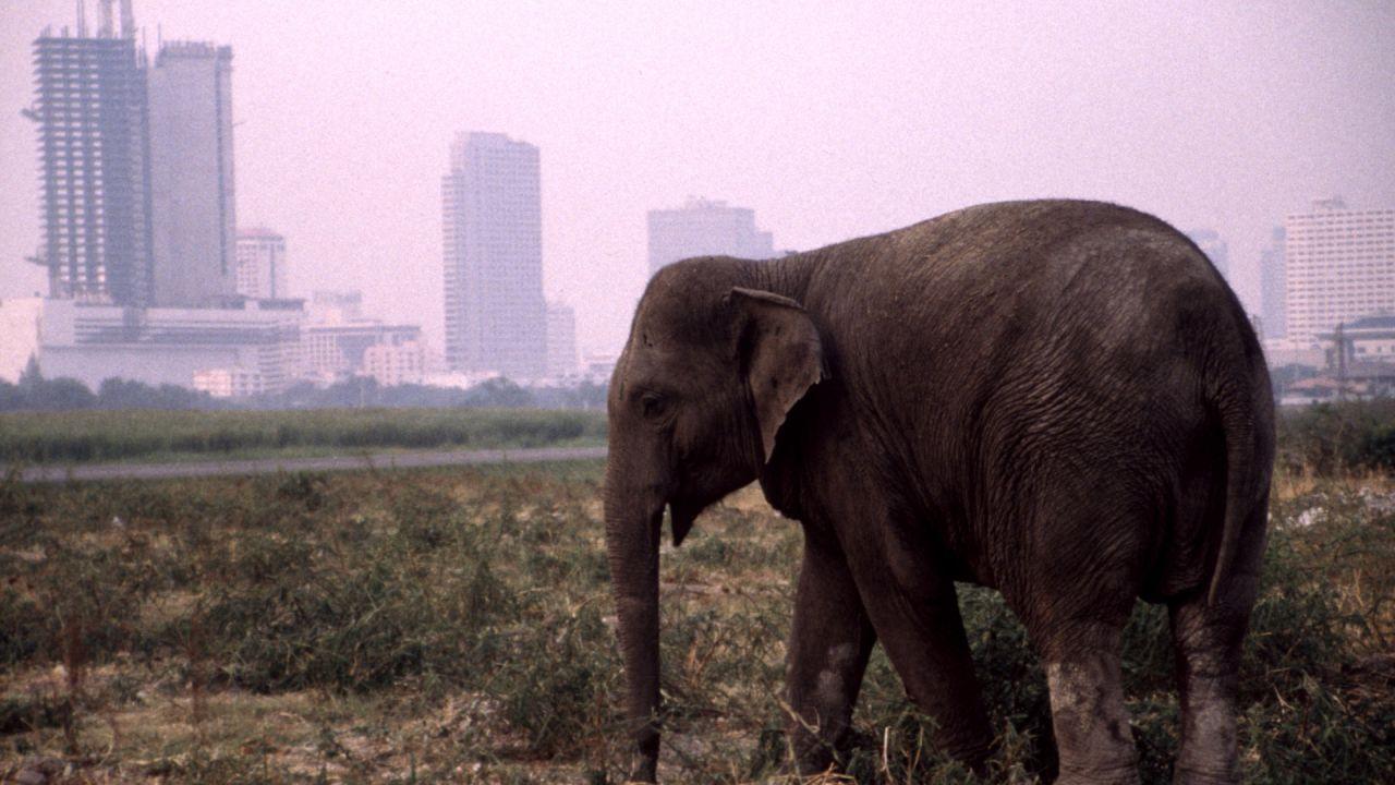 Urban Elephant
