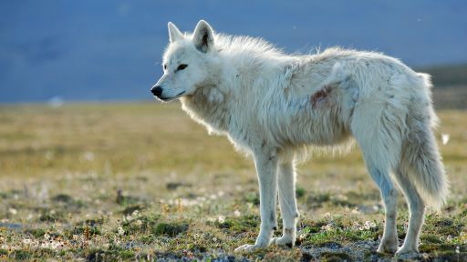"Did You Watch ""White Falcon, White Wolf""? – Tell Us What You Think!"