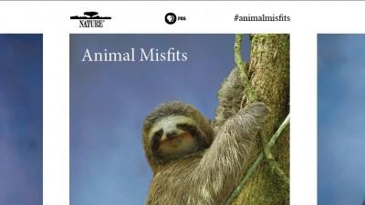 Animal Misfit Yearbook Photos