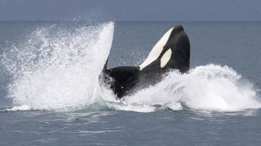 Did You Watch Invasion of the Killer Whales? Tell us what you think!