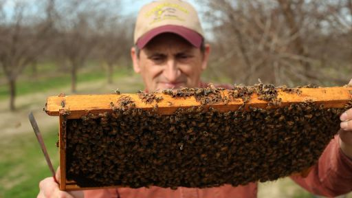'Mystery of the Missing Bees' Looks Back at Colony Collapse Disorder