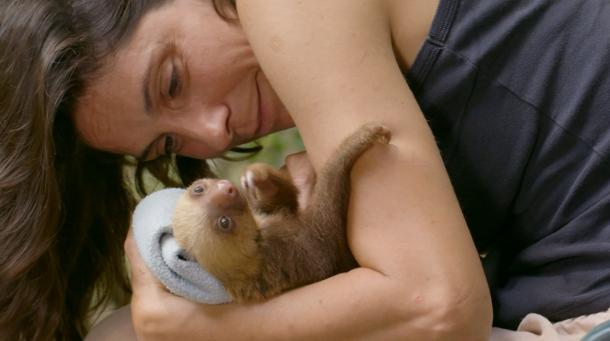ana salceda sloth