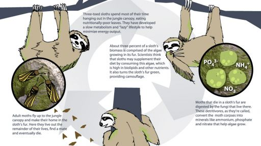 Sloth and Moths: A Mutually Beneficial Relationship