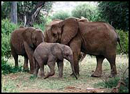Poachers killed whole families.