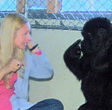 Koko grasped ASL quickly.