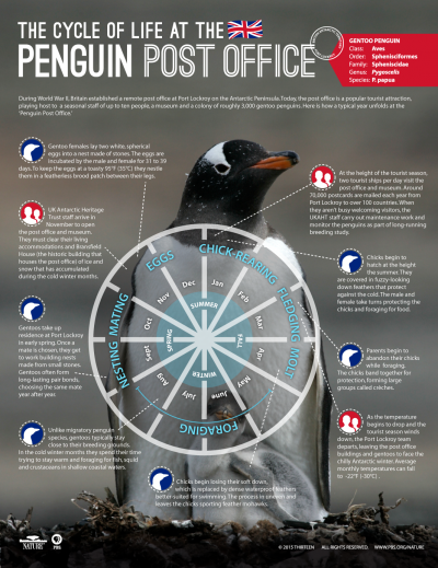 Infographic: Cycle of Life at the Penguin Post Office