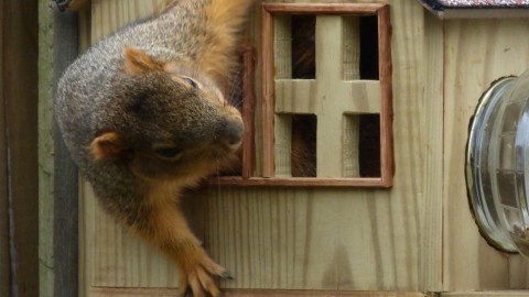 Animal Homes | Episodes | Nature | PBS