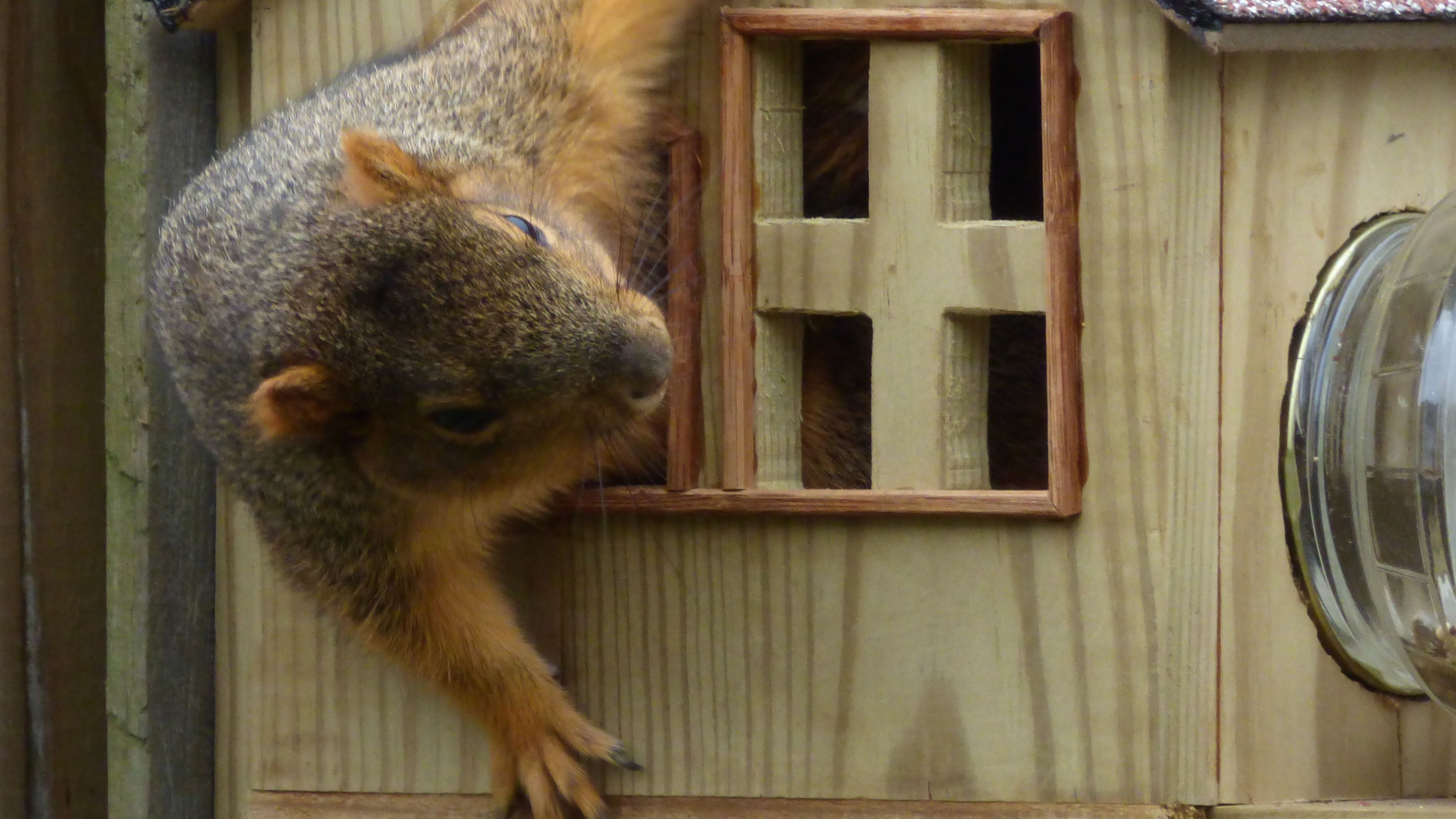 Animal Homes About Nature Pbs