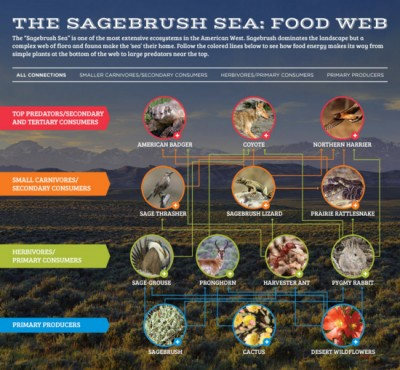 Explore 'The Sagebrush Sea' Food Web