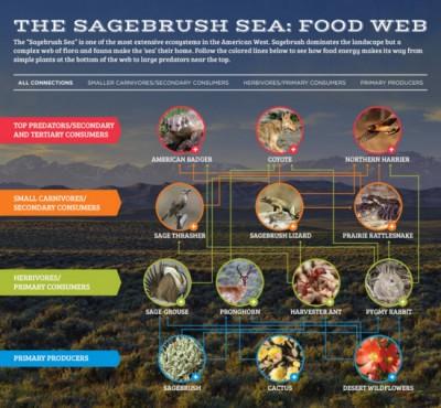 Explore 'The Sagebrush Sea' Food Web
