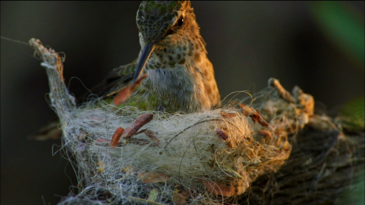 Birds: Designers, Engineers, and Builders of Nests