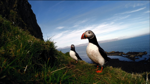 The Puffin Colonies