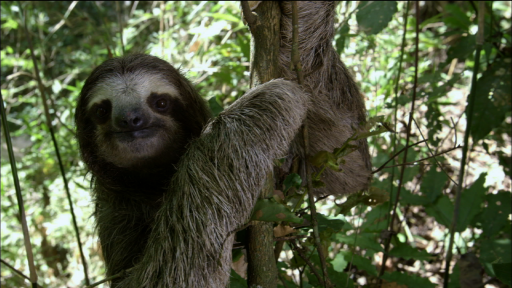Sloths in their Ecosystem