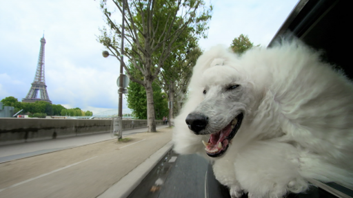 PETS Wild at Heart | Episode 2 | Preview