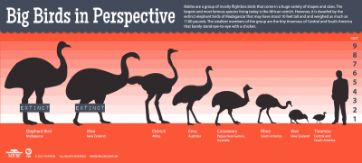 Big Birds in Perspective