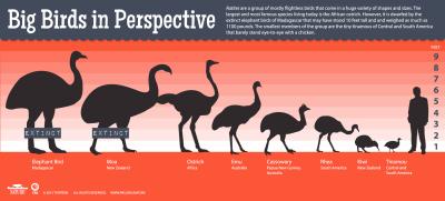 Big Birds in Perspective