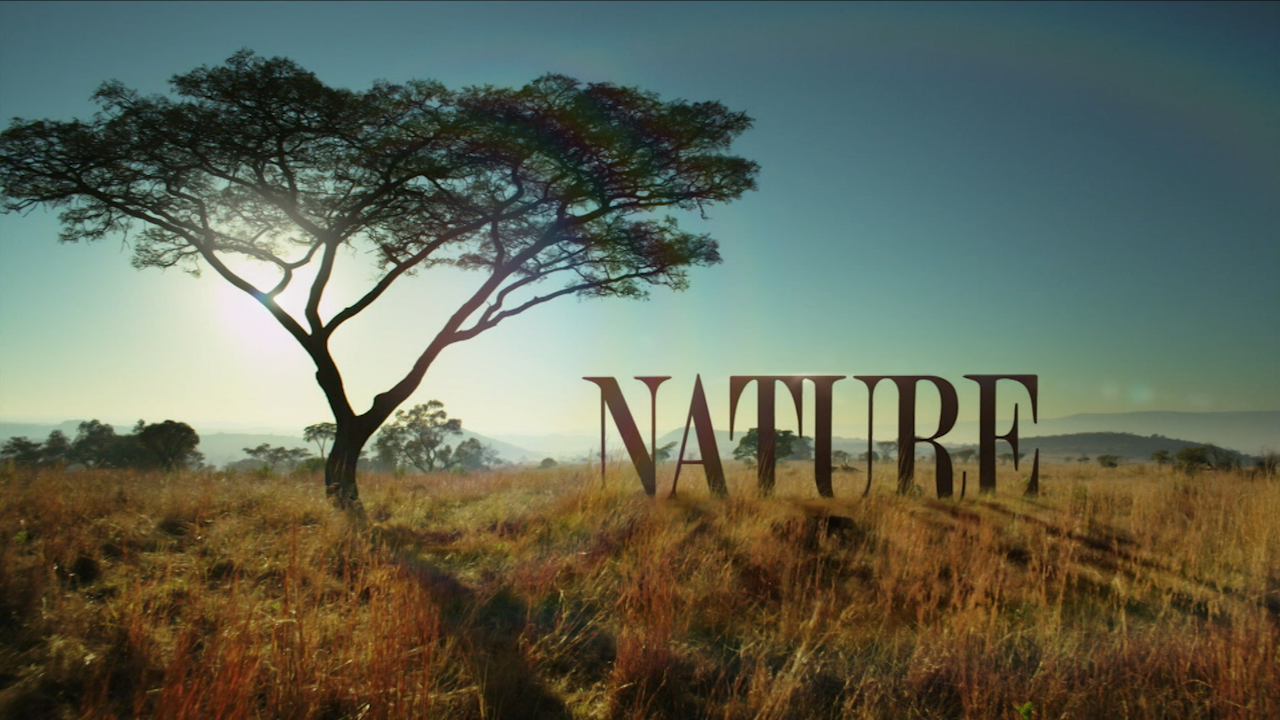 Inside NATURE's New Opening Sequence