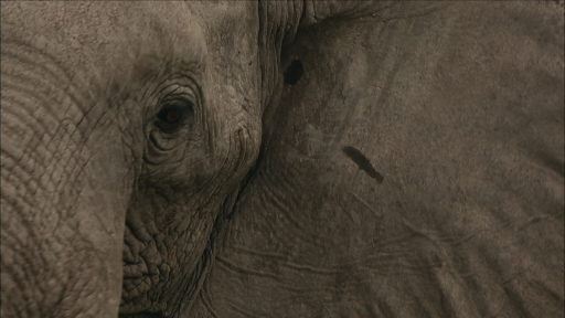 'Soul of the Elephant' Animated GIFs