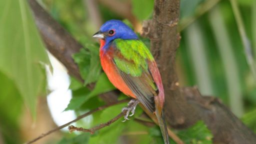 Colorful 'Painted Bird' Visits Brooklyn's Prospect Park