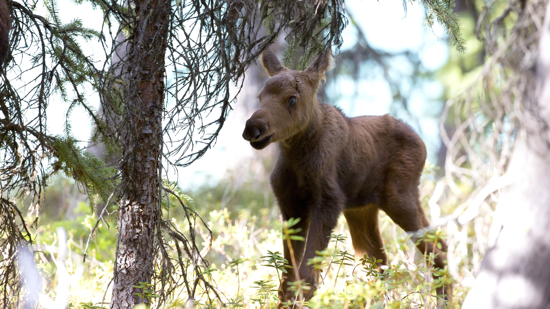 moose net worth salary height weight