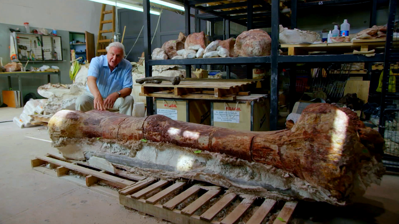 Sir David Attenborough with a giant sauropod thighbone. | Credit: NATURE/BBC