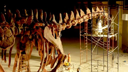 Raising the Dinosaur Giant -- Giant Dinosaur Skeleton Assembled in 60 Seconds!