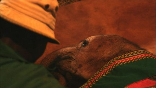 Clip |  Bedtime at the Elephant Orphanage