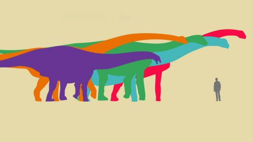 Which Dinosaur Was the Largest?