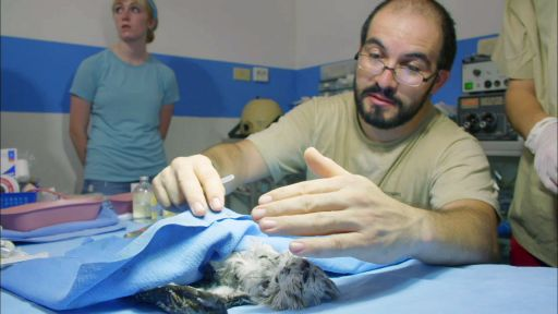 Podcast: Update on the Animals of 'Jungle Animal Hospital' and more…